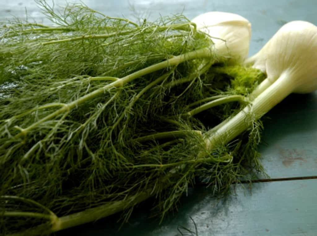 Add Fennel to Your Food Funnel!