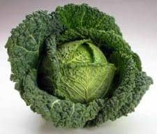 Cabbage_SM