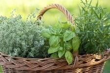 Herbaliciousness! (I'll explain…)