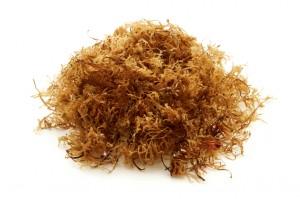 Irish (Carrageen) moss