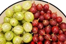 Gooseberries, gooseberry juice, tart and yummy berries,