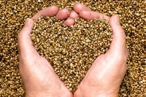 Hemp Hearts, Hemp seeds, Hemp,