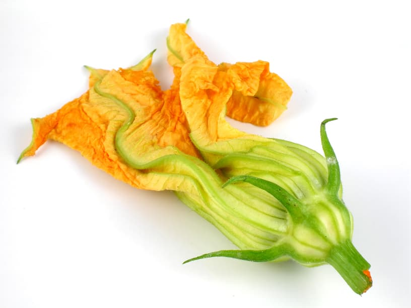 squash blossom season   saving dinner