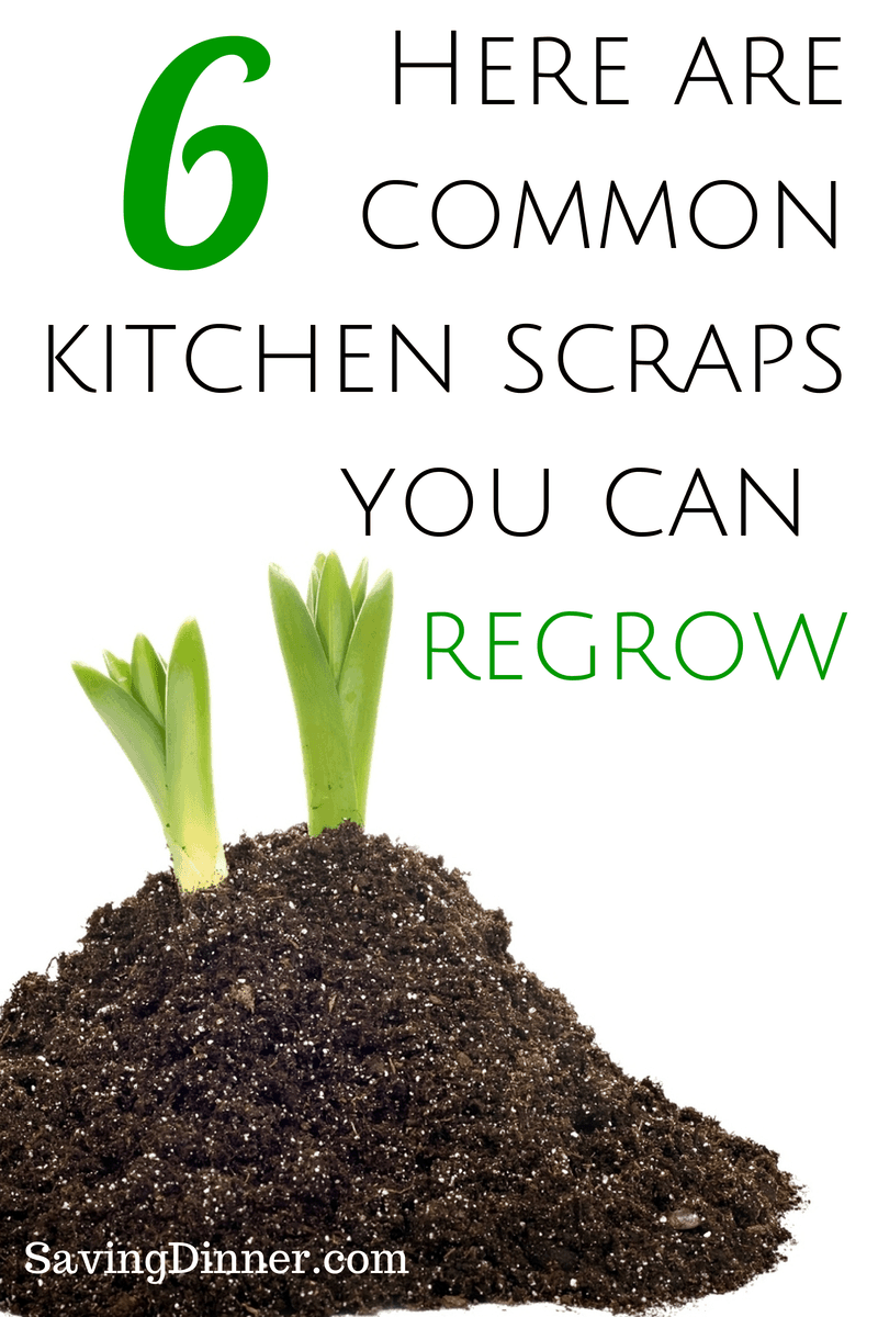 Grow your own stir fry from kitchen scraps