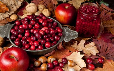7 Fall Foods to Forage For