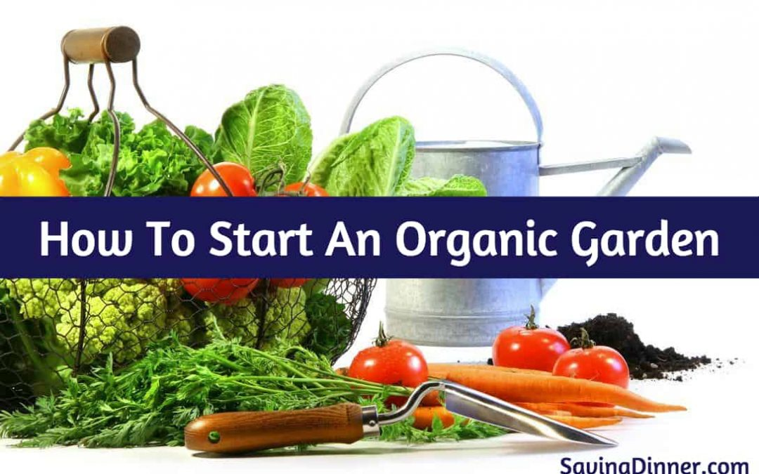 How to start an organic garden (here's how!)