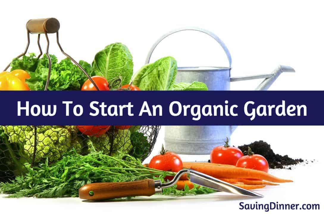 How To Start An Organic Garden (hereu0027s How!)