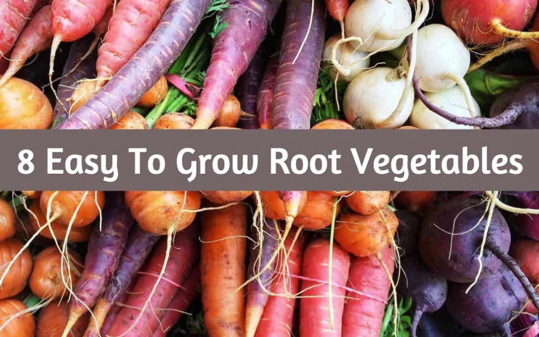8 Easy To Grow Root Vegetables
