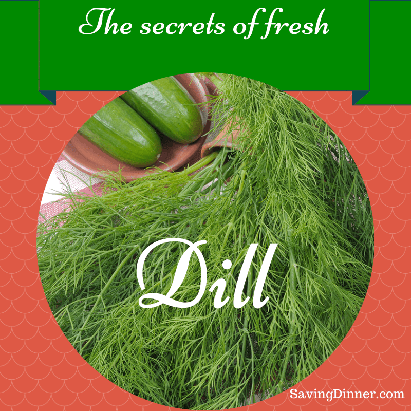 Dill Herb and Its Healthy Benefits