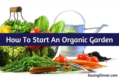 how to start an organic garden. Here Are The Basic Tricks And Tips You Need To Start Your Own Organic Garden . How An R